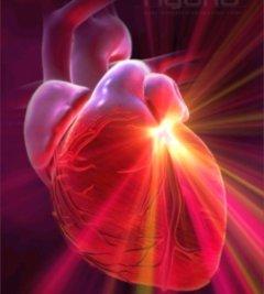 žsž-duchovni srdce